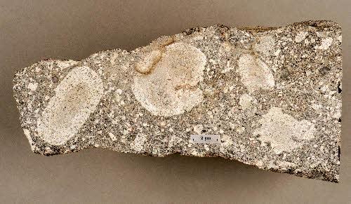 Yksikehäisiä pallosia graniitissa. Lokonmäki, Iitti. GTK:n kivimuseo.