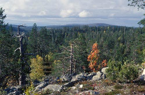 Maisema Kivitunturin geologiselta luontopolulta. Savukoski.