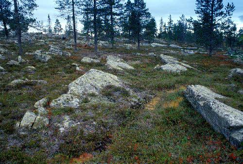 Kivitunturin geologinen luontopolku. Kvartsiittia, jossa näkyvissä aikanaan virtaavan veden alla muodostuneita särkkärakenteita. Savukoski.